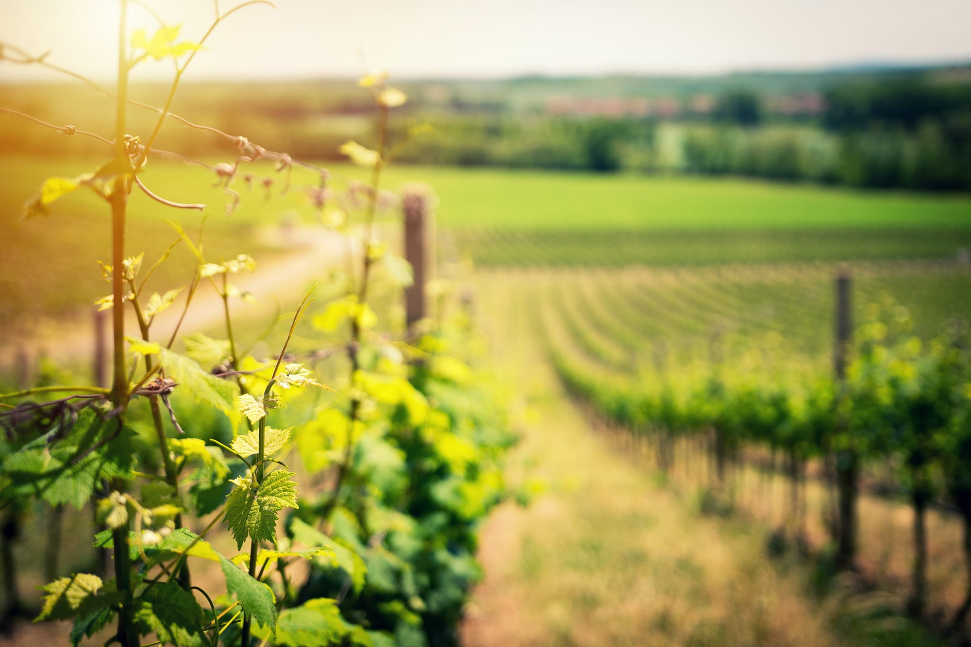 Oeno Passion grossiste vin restaurateurs bretagne