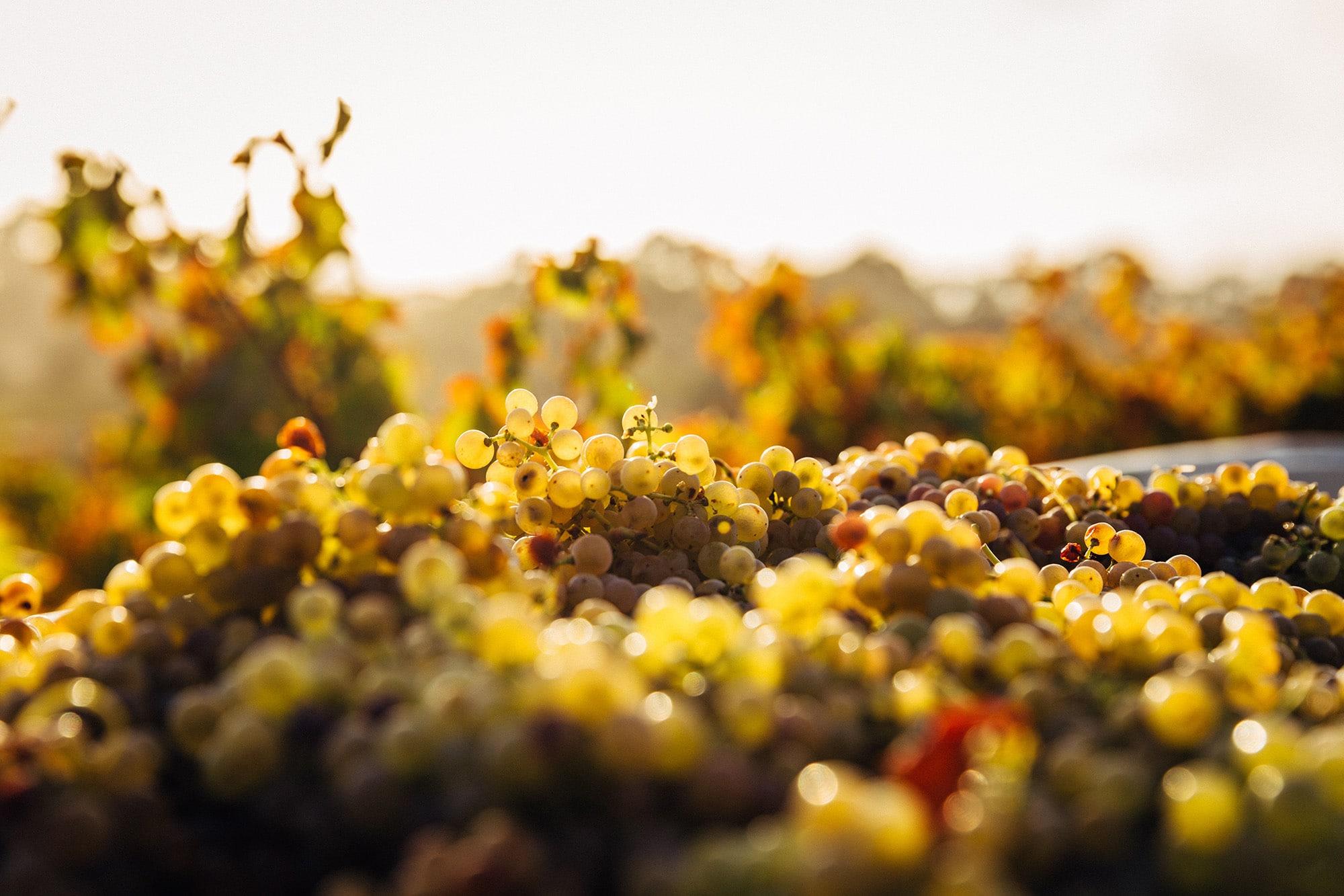 Oeno Passion - professionnel vin pour les restaurateurs et cavistes