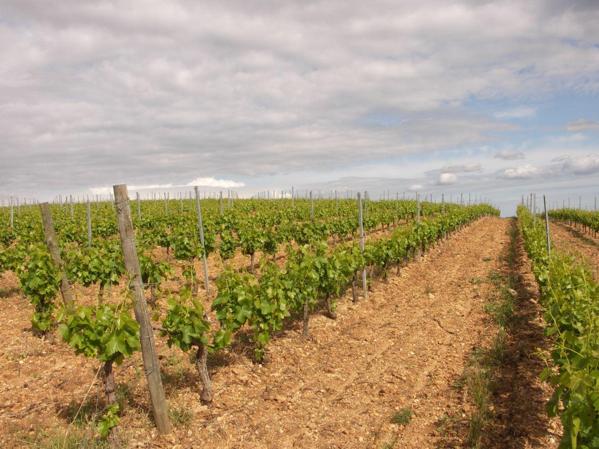 Domaine Des Griffes Vignes